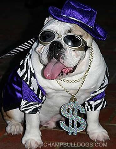Champbulldogs Com English Bulldog Books And Clothes